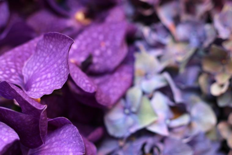 art-floral-01